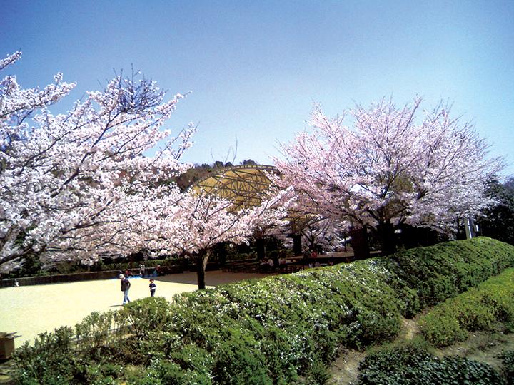 桜_憩いの森