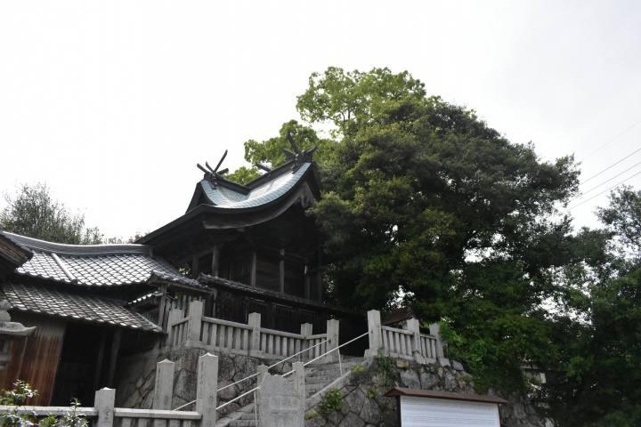 竹原ドライブ床浦神社ウバメガシ
